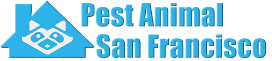 San Francisco Wildlife and Animal Removal